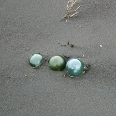 Finding Glass Floats in Gold Beach
